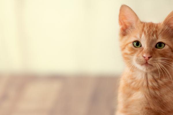 Checklist for a new kitten