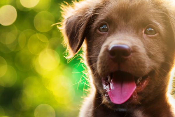 Checklist for new puppy owners