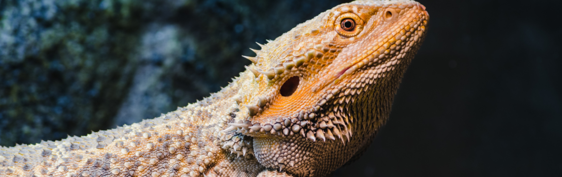 Heat lamps for reptiles…