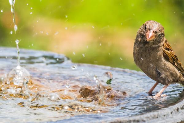 How to clean a bird bath…
