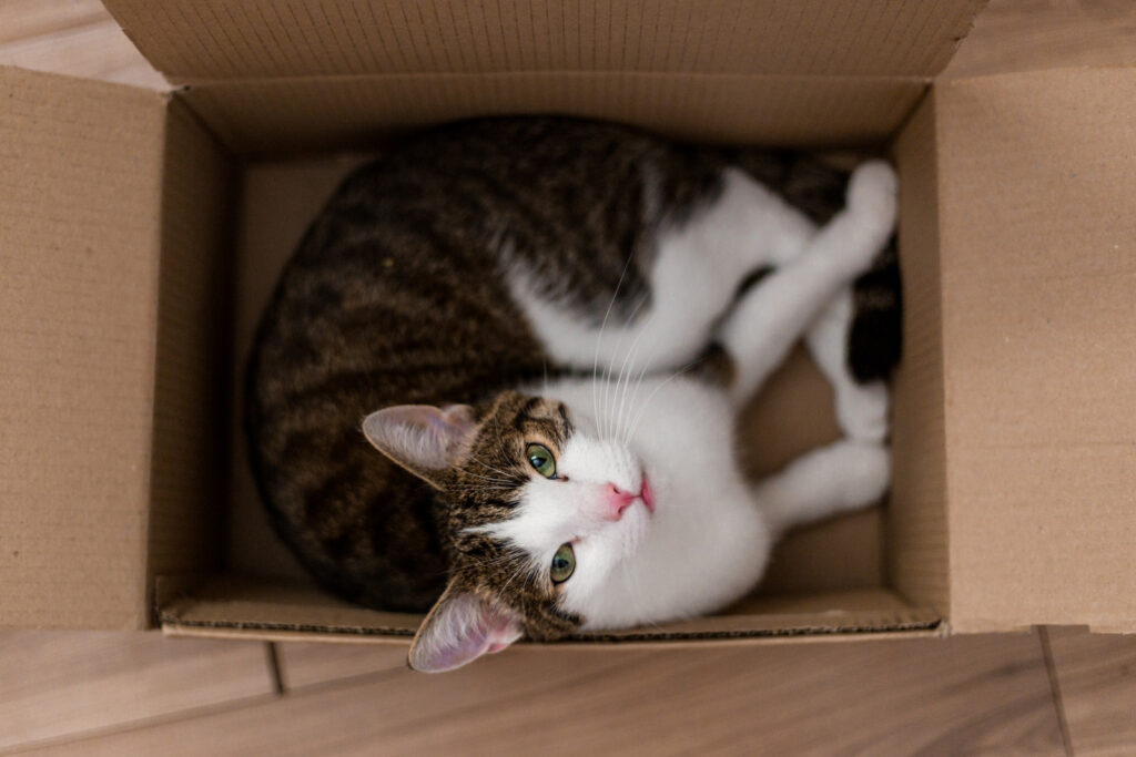 Cat sitting in a cardboard box in an article about cats playing different games.