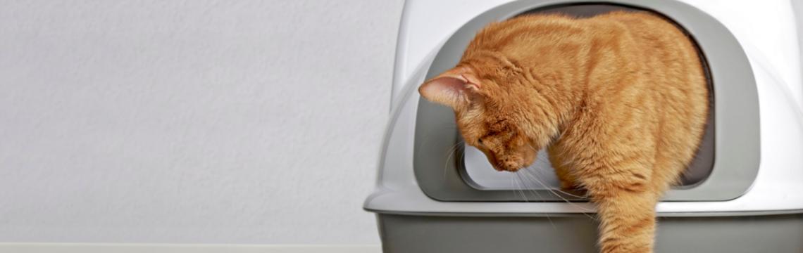 Choosing cat litter, and how to litter train a kitten.