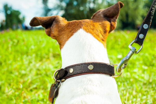 How to choose the best dog lead and collar