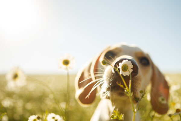 Is your dog itchy all the time?