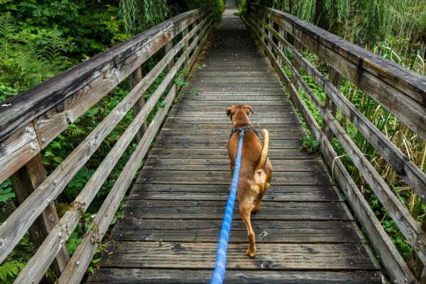 The best dog lead for your pet