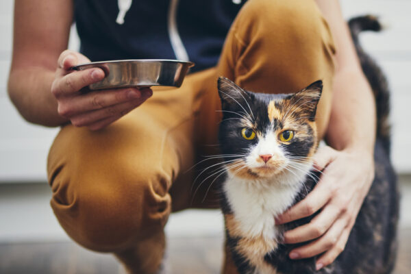 Are cats carnivores?