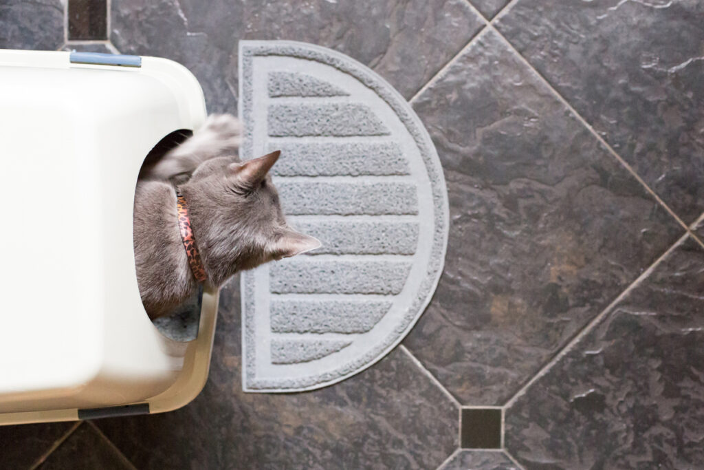 Grey cat climbing out of an enclosed litter box, in an article about how to litter train a kitten.