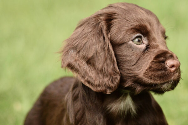 How much should I feed my puppy?