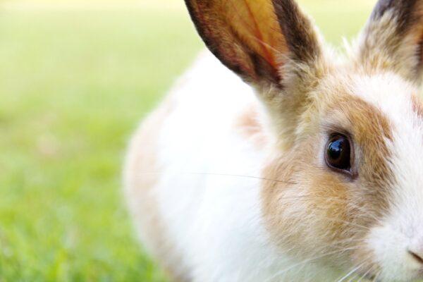 Do rabbits need hay?