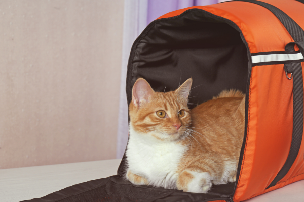 Cat Carrier Training