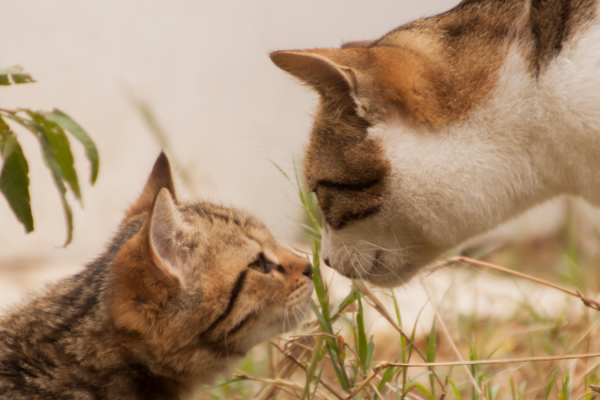 How to introduce your kitten to a cat…