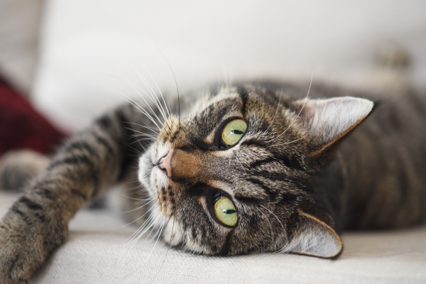 Signs of cat stress…