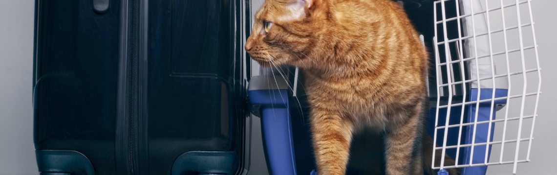 How to find a great cattery
