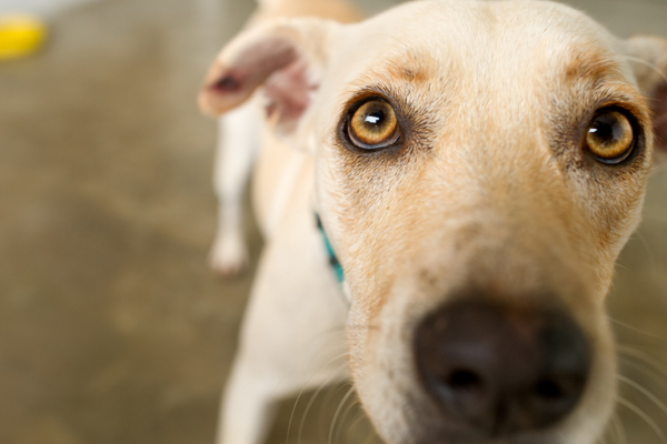 Tips for rehoming a dog