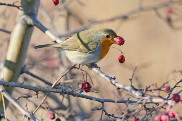 Best plants for garden birds