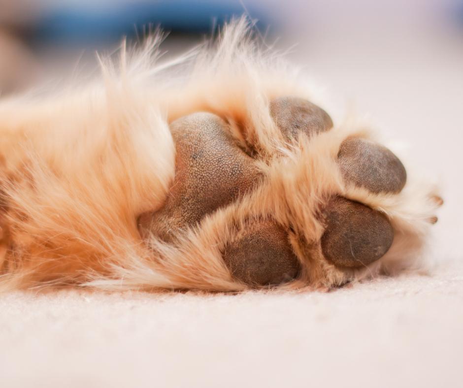 Dog paw pads