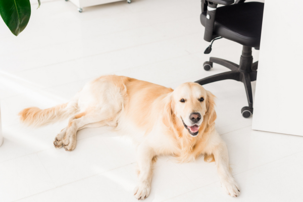 How to work from home with dogs
