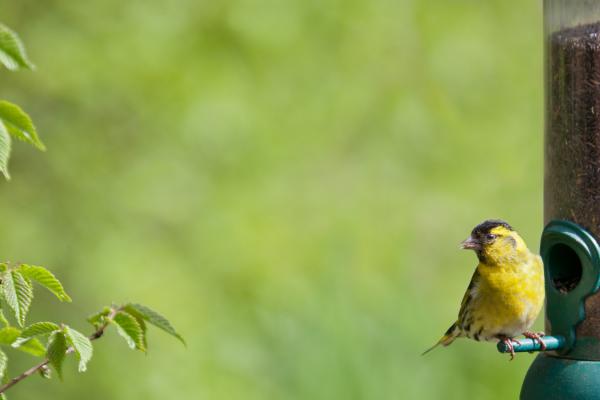 What do garden birds eat in the summer?