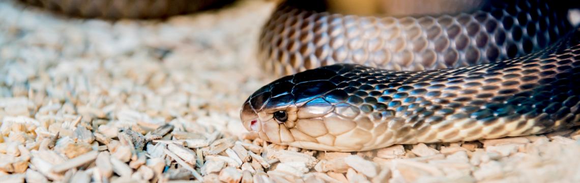 Reptile skin care