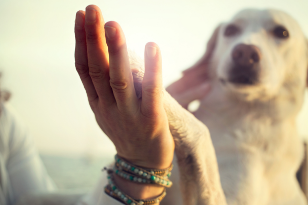 What does a dog's body language mean?