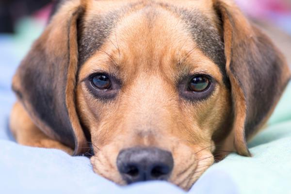Do dogs feel grief?
