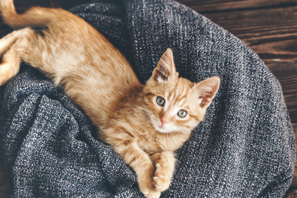 Kitten development stages