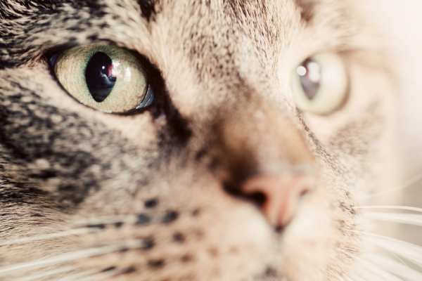 Can cats see in colour?
