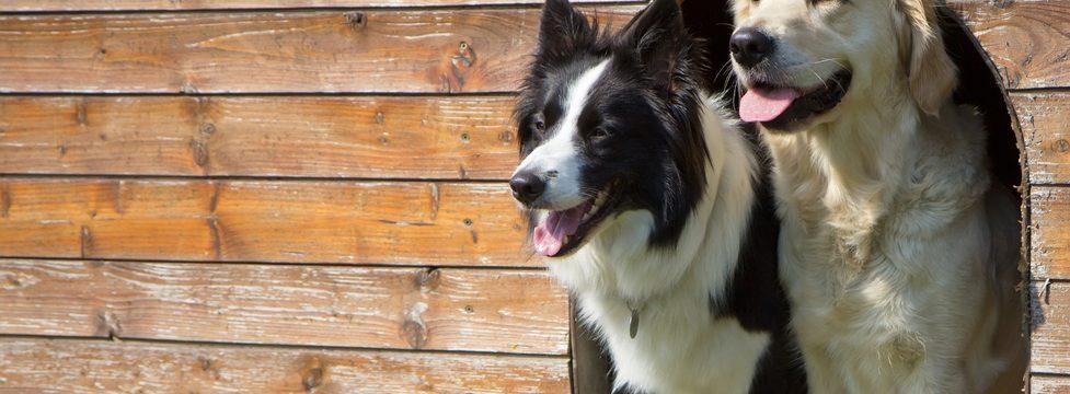 Dog holiday care
