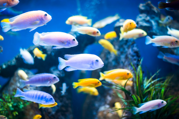 Your guide to the behaviour of fish