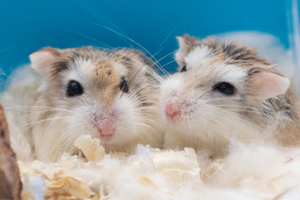 Your guide to choosing and cleaning a hamster cage