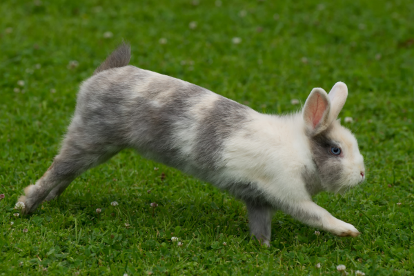 Top tips for training a rabbit