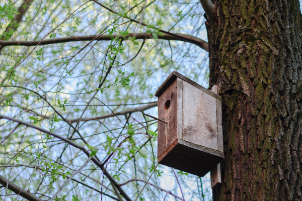 Nest boxes in the Autumn
