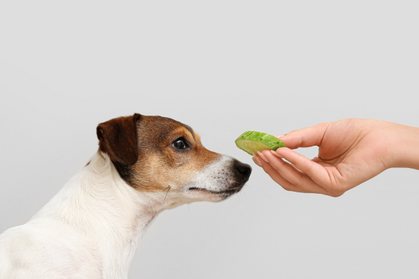 Can dogs eat cucumbers?