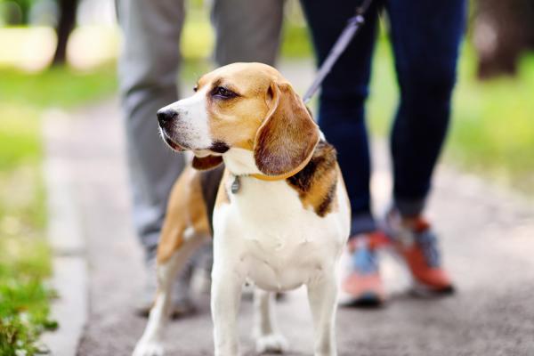 How far to walk a dog?